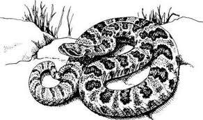 rattlesnake,copperhead,snake